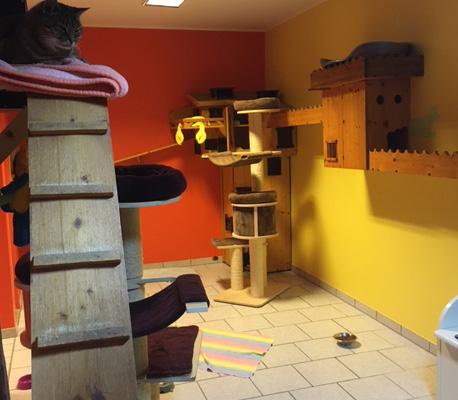 Katzenpension Hafner